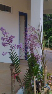 Orchid in front of Hotel Coffee Mountain Inn
