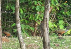 WoodRail